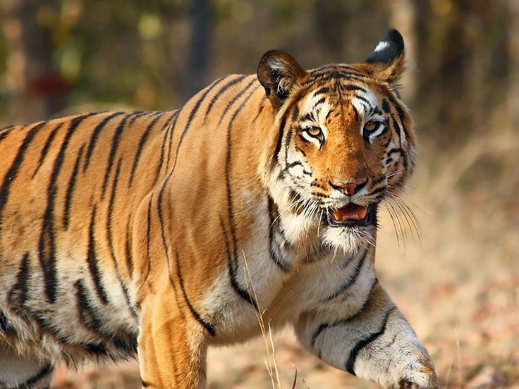 Spike Island Wildlife Sanctuary - in Andaman and Nicobar, India