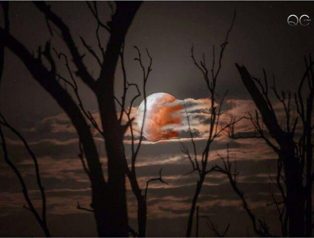 Ağaç ve ay
