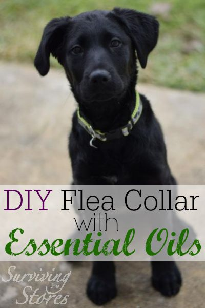 How to make your own non-toxic flea collar for pets with essential oils!!