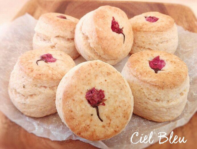 今日は季節限定『さくらスコーン』☆ご用意しています♪&ココアくん☆|~仙台のケーキ屋さん~『おかしのお店 Ciel Bleu シェルブルー』のブログ