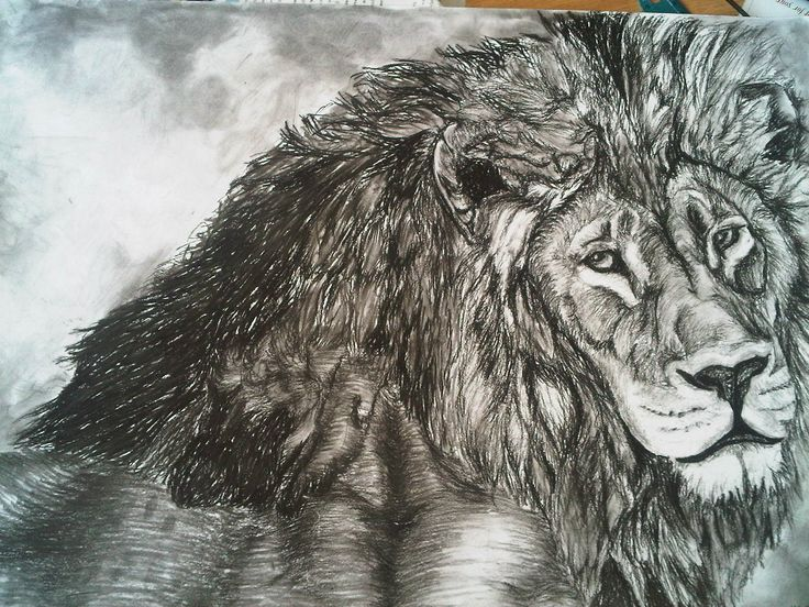 Lion Charcoal Drawing 50x70 cm