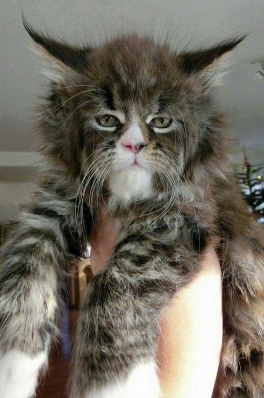 This cat reminds us of someone but we just can't put our finger on it! —