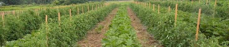 Boeren VS melden grootschalige vervuiling door transgene gewassen