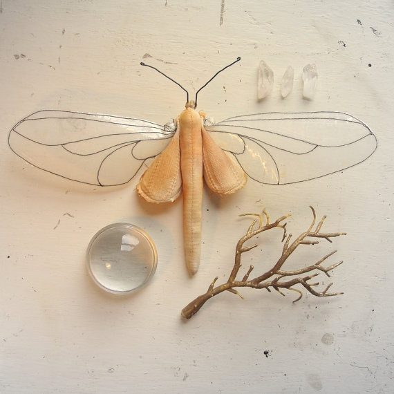 95 Best Insects Images On Pinterest  Insects Butterflies And Pleasing Small Moths In Bathroom Design Inspiration