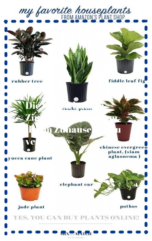Verwandeln Sie Ihr Badezimmer In Ein Tropisches Paradies Mit Zimmerpflanzen Die Hohe Luftfeuchtigkeit Im Dur In 2020 Plants Buy Indoor Plants Online Buy Indoor Plants