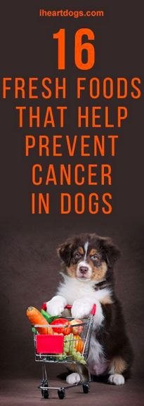 16 Fresh Foods That Help Prevent Cancer In Dogs  I wasn't sure about the red pepper but we feed ours quite a few of the other things