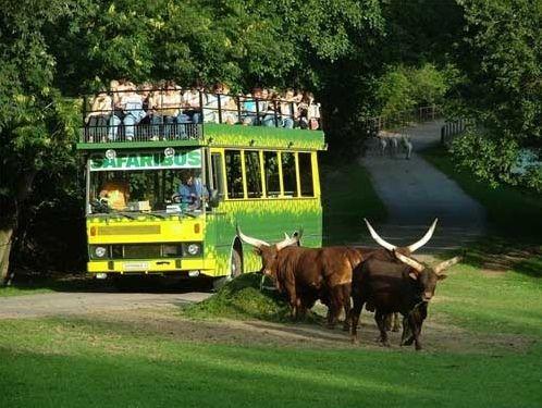 Biuro Turystyczne Szopen - Tour Kudowa Zdrój, touroperator organizuje wycieczki z Kudowy w Góry Stołowe, wycieczki do Pragi, wycieczki do Adrspach Skalne Miasto, wycieczki do Morawski Kras, wycieczki do Wiednia, wycieczki po Ziemi Kłodzkiej. Szopen - Tour organizuje wyjazdy do Czech i Austrii. W naszym biurze kupić można wakacje do Egiptu, Tunezji, Turcji oraz do innych ciepłych krajów