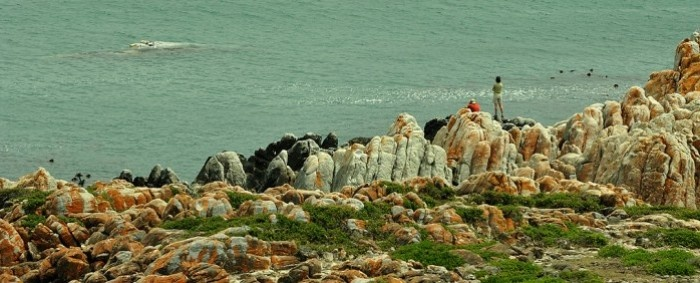 The view from WHALEsong Lodge – Gansbaai « Life Changing Holidays – Local and International Travel Services