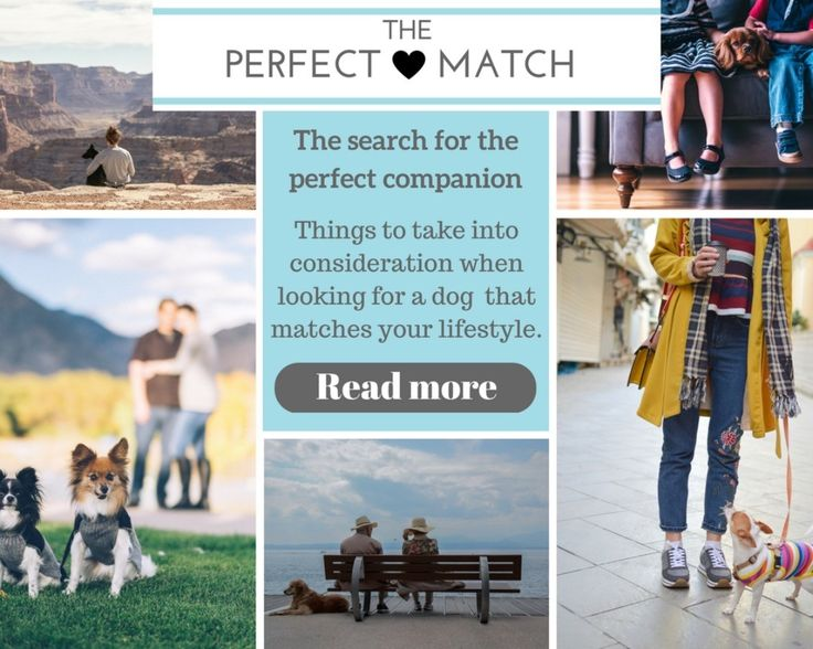 Browse our magazine by category: The Perfect Match <3 Tips to find a dog that matches your lifestyle. Read more at http://ift.tt/2qOBl6A