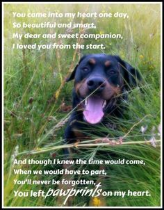 Rottweiler Quotes More