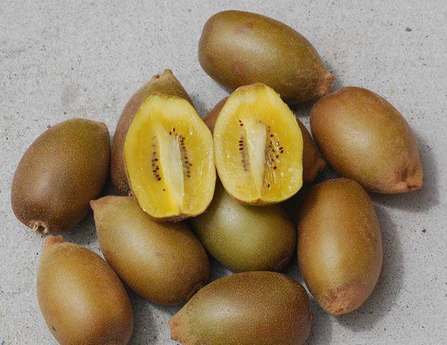 Kiwi Seeds ★ GOLDEN ★ Sweet Golden-Yellow Fruit ★ RARE ★ GMO FREE ★ 25 Seeds ★