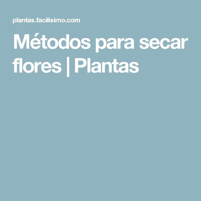 Métodos para secar flores   Plantas