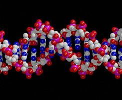 Uniquely Me | Sciencelearn Hub -  What makes me, me? My genes or my environment?