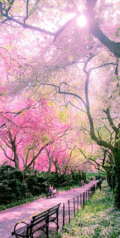 The Conservatory Garden at Central Park in New York City • photo: Chris Brady (The Weblicist of Manhattan) on I Photo New York