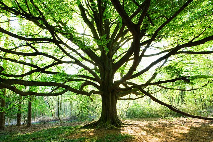 England's beautiful woods...not to be missed this summer!