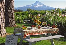 Featured this week on Farm Stay U.S.: Draper Girls' Country Farm offers a unique farm-stay experience in the Mount Hood area of Oregon.