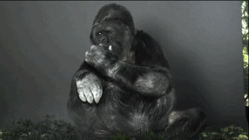 It's up to man to fix earth now. | This Heartbreaking Video Of A Gorilla Asking For Change In Sign Language Is A Massive Wake Up Call