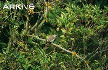 Garden warbler perched on branch