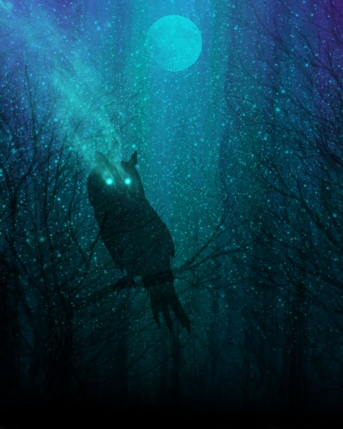 Society6 art: owl, night sky, stars, space, moon, nature, forest, adventure, explore, boho, bohemian