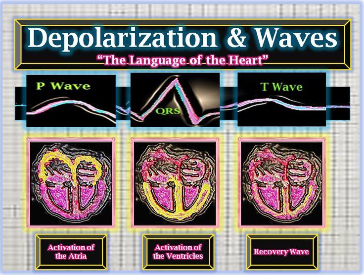 Propagating Depolarization Wave Front Manual Guide