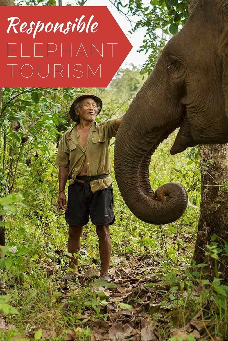Check out responsible elephant tourism in SE Asia instead of elephant riding! You get to follow these retired elephants through the jungles of Mondulkiri, Cambodia and care and bathe these magnificent creatures! Check out the Elephant Valley Project!