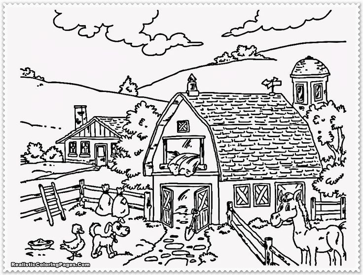 Realistic Farm Animal Coloring Pages 02