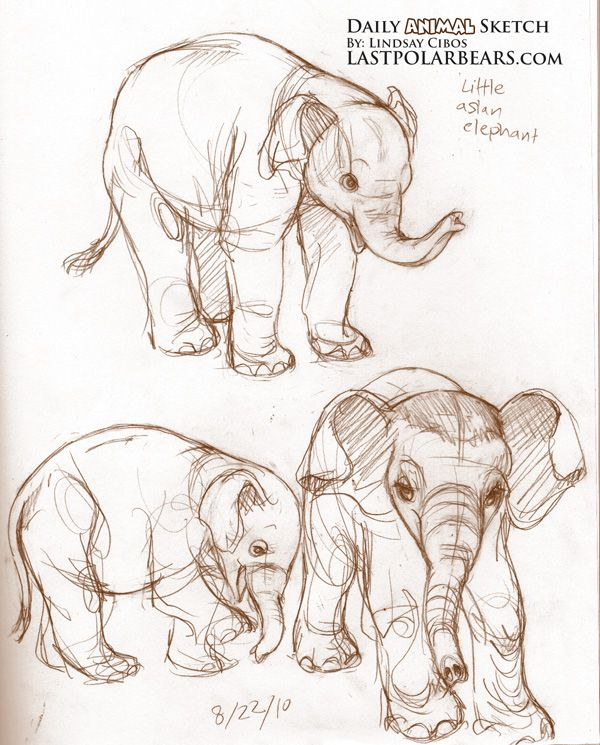 little elephant sketches  ★    CHARACTER DESIGN REFERENCES™ (https://www.facebook.com/CharacterDesignReferences & https://www.pinterest.com/characterdesigh) • Love Character Design? Join the #CDChallenge (link→ https://www.facebook.com/groups/CharacterDesignChallenge) Share your unique vision of a theme, promote your art in a community of over 50.000 artists!    ★