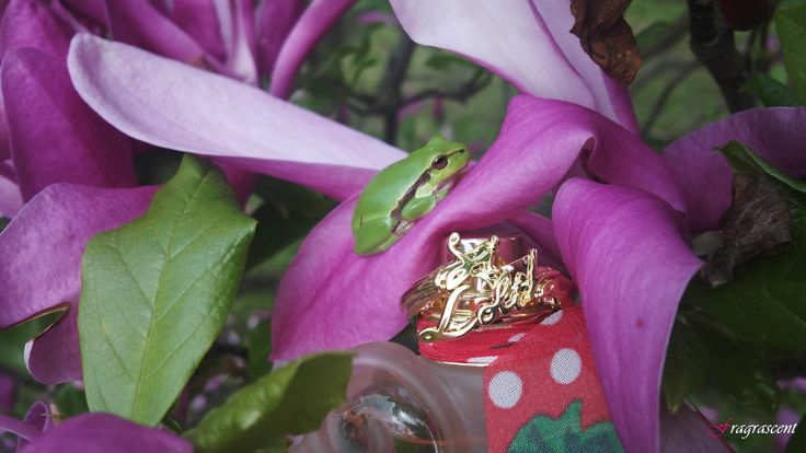 Lolita Lempicka- Si Lolita EDT- perfume review on fragrascent.pl  #perfume #fragrance #beauty #lempicka #lolita_lempicka #lolitalempicka #review #perfumy #flakon #perfume_bottle #scent #parfum #silolita #si_lolita #edt #clover #koniczyna #frog #treefrog #tree_frog #rzekotka #rzekotkadrzewna #rzekotka_drzewna #magnolia