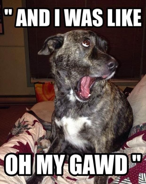 Funny Meme A Day : Dump a day attack of the funny animals pics humor