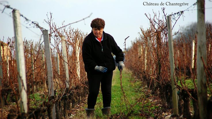 Faisons tomber les bois ! taille / pruning / chantegrive / graves / bordeaux / wine / winter