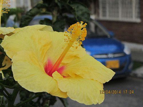 Flor - B Minuto de Dios IMG_1638