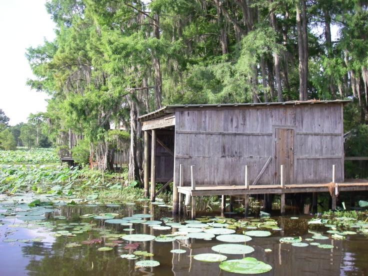 17 best images about fishing spots on pinterest trips for Caddo lake fishing