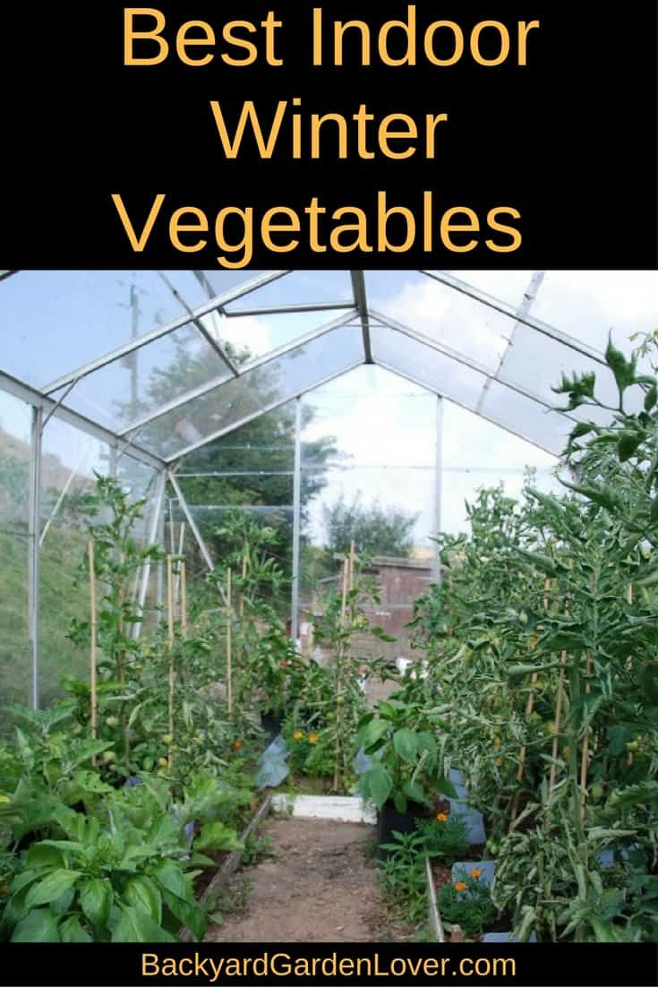Did you know you could grow an indoor winter vegetable garden? Here's a list of veggies and herbs that grow well indoors. .