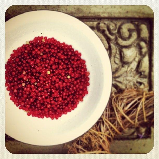 Augusti - Röda vinbär
