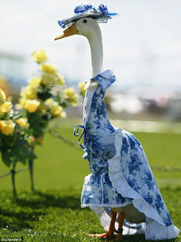 Old Fashion Goose