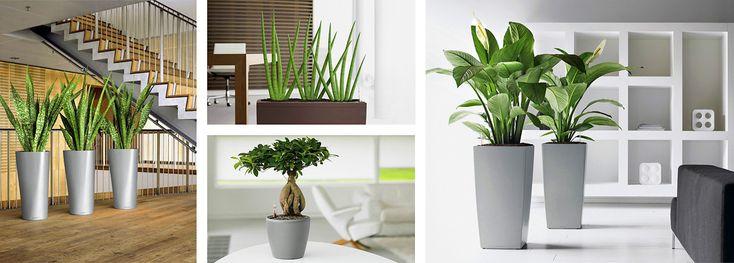 növénydkoráció   növény design   növény dekor - Fitoland.hu