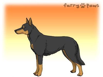 Furry Paws // WCT Kip's Vindication [1.558] *BoB*'s Kennel