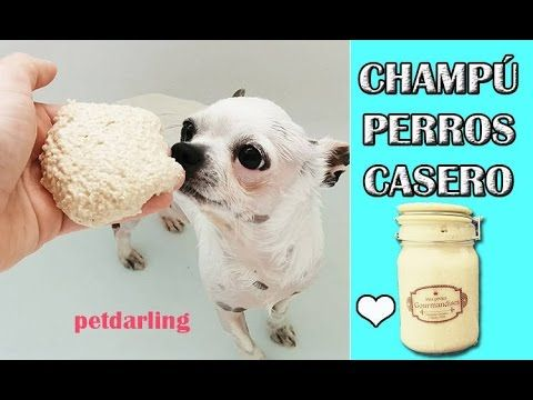 CHAMPÚ PARA PERROS Y GATOS AVENA - Piel sensible ★ DIY PetDarling - YouTube