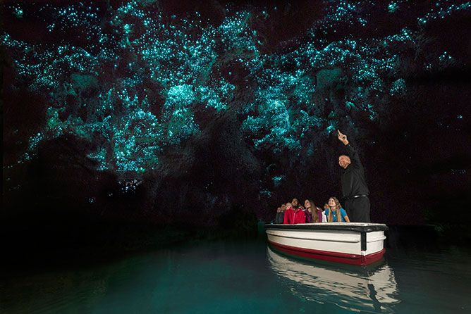 Waitomo Glowworm Caves, North Island New Zealand