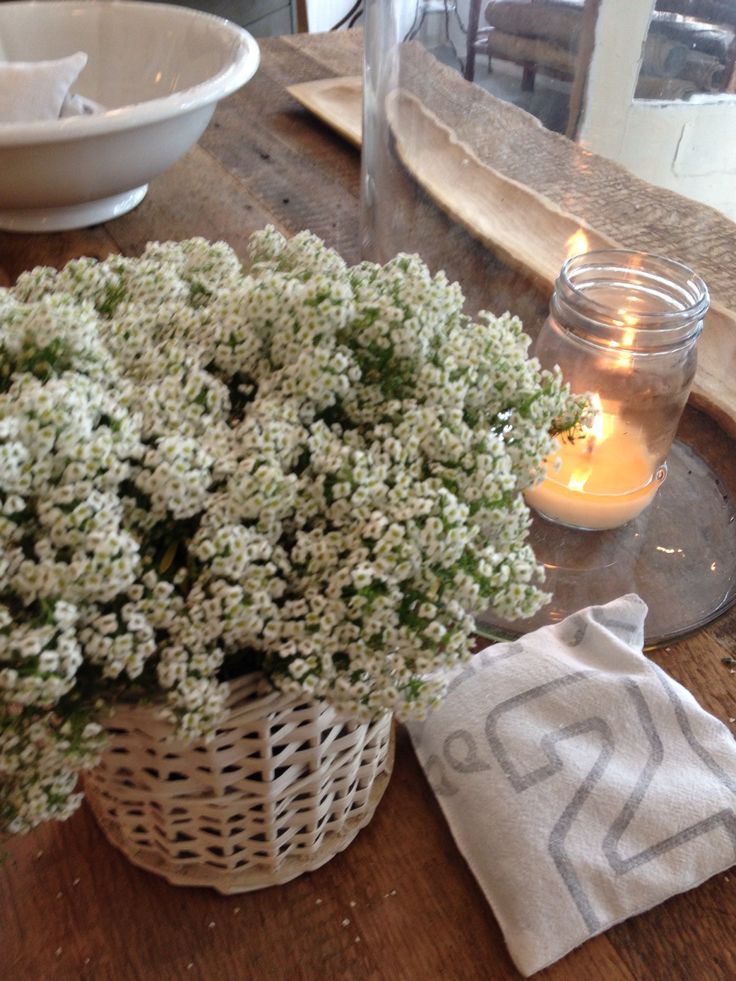 146 best the white flower farmhouse shop images on pinterest white flowers mightylinksfo Gallery
