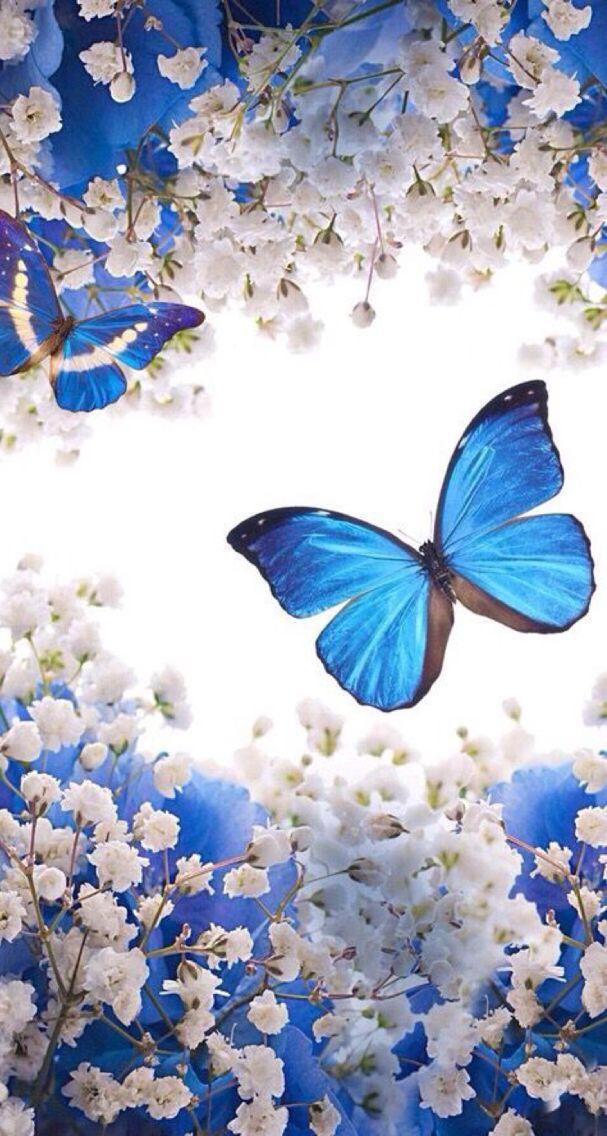 Wallpapersiphone Beautiful wallpapers, Butterfly