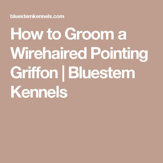 How to Groom a Wirehaired Pointing Griffon | Bluestem Kennels
