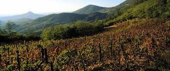 I Colli Euganei e il vino