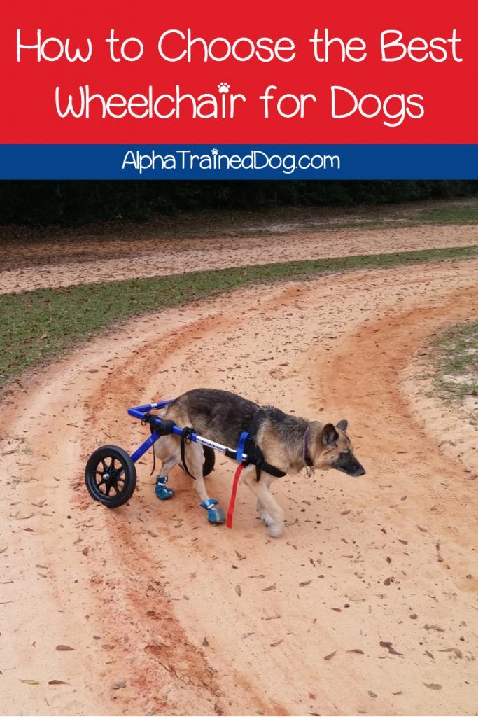 Finding The Best Wheels For Dogs With Bad Legs Can Totally Change