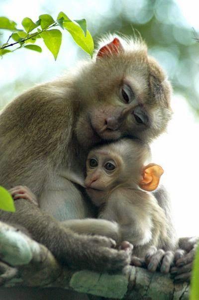 Monkey mom & baby > sweet primates. How precious!