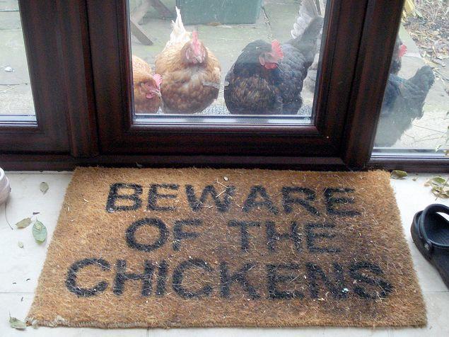 Chicken Humor Funny: 76 Best Chicken Jokes & Humor Images On Pinterest