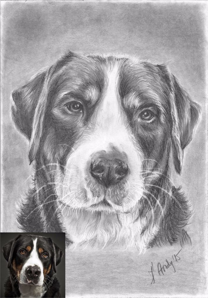Custom original dog/cat drawing portrait from your photo A4 #Realism