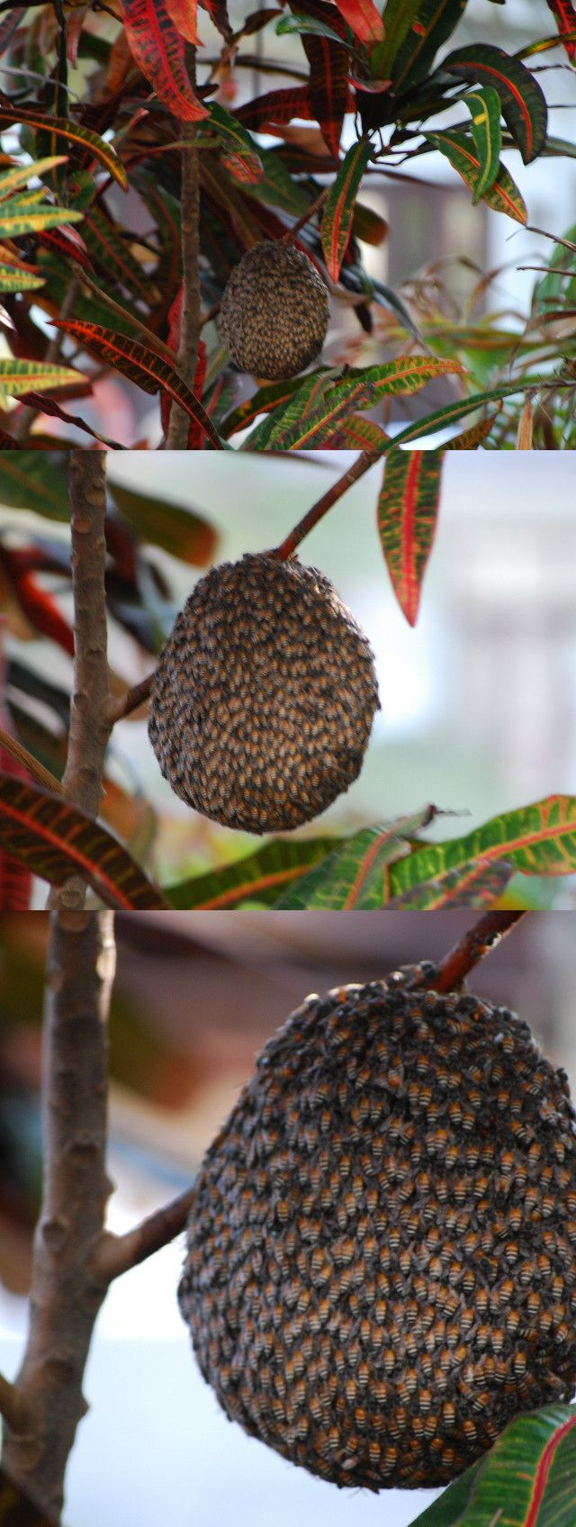On holiday in Vietnam when I saw an exotic fruit hanging in a tree, moved in for a closeup and OMFG RUN!!!!