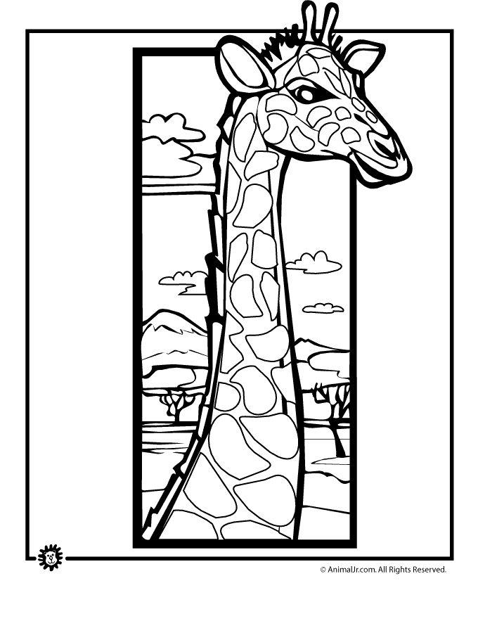 14 Best Giraffe Images On Pinterest
