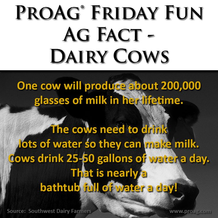ProAg Friday Fun Ag Fact: Dairy Cows